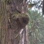 古戸野神社の木
