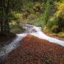 秋の妙見神水